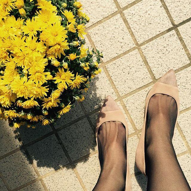 実家に花を飾りたくて、ちょっと帰省。秋らしいスエードとハラコのコンビパンプスでおとなしめに。#DIANA#本日の足元チラ#靴磨き女子部#靴磨き女子部ピンクレンジャー#スエード#スエードパンプス #コンビ#田舎暮らし