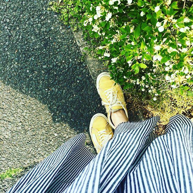 春に新調したヒッコリーのスカート、足もとには大好きな黄色この#converse は、何年も履いてるので…:時にはBBQで泥まみれにしちゃったり…かかとが痛んできたり…とだいぶ時を重ねてます。その度に洗ったりしがら今でもお世話になりっぱなし:この春夏も一緒におてんばに活動します♩#靴磨き女子部 #足もと倶楽部#バクバクコアラ#スニーカー#sneakers #コンバース#converse #onestar #スニーカー女子 #スカートコーデ #shoecaregirls#おてんばか