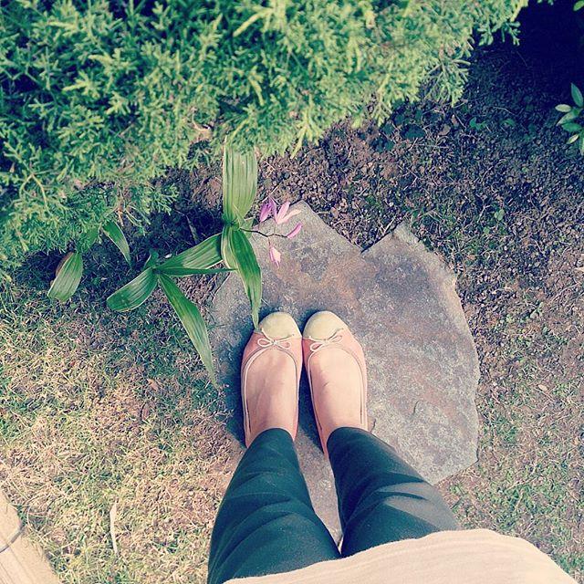 新緑がきれいな季節ライトグリーン×ピンクのコンビがかわいいpicheのパンプスを履いてお出かけHP:@shoecaregirls#靴磨き女子部#ハスキー犬#ハスキーケン#piche#パンプス#フラットパンプス#スエード#コンビ#足元クラ部#カーキパンツ#新緑がきれい#シラン