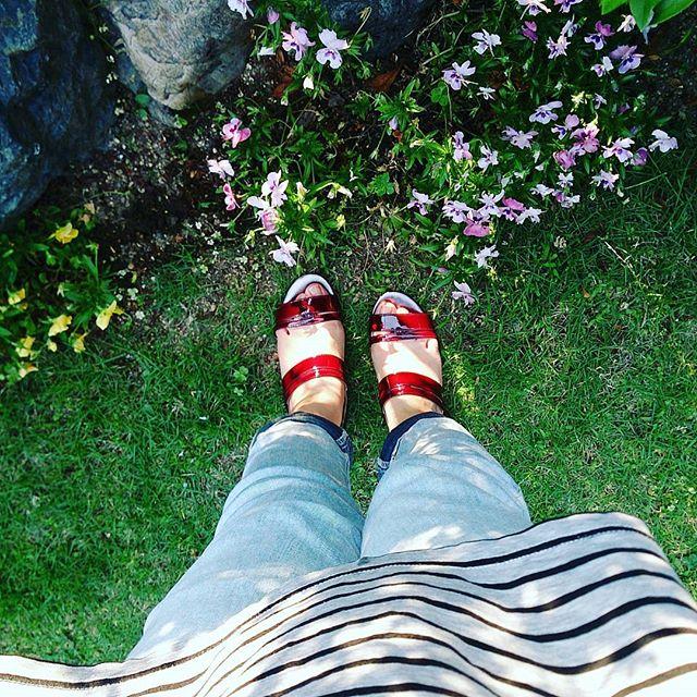 実家の庭のビオラ、初夏の今も元気に咲いています 本日は薄いブルーのデニムにヒールのあるワインレッドのサンダルを合わせて HP:@shoecaregirls#靴磨き女子部 #ハスキー犬 #ハスキーケン #靴のこと  #芝生 #ワインレッド #サンダル #patrikcox #パトリックコックス #デニム #ビオラ #本日の足元チラッ #ボーダーシャツ #足元クラ部