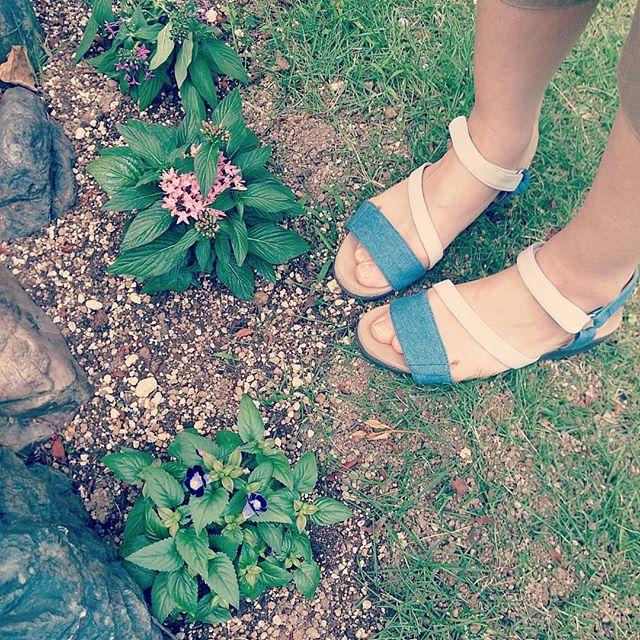 今日も天気は晴れサンダルでお買い物にこの前の休日に植えた、暑さに強いペンタスとトレニア。これからの見頃が楽しみです! #靴磨き女子部 #ハスキー犬 #ハスキーケン #本日の足元チラッ #サンダル #フットベッドサンダル #bellflorrie #靴のこと #足元クラ部 #ペンタス #暑さに強い花 #トレニア