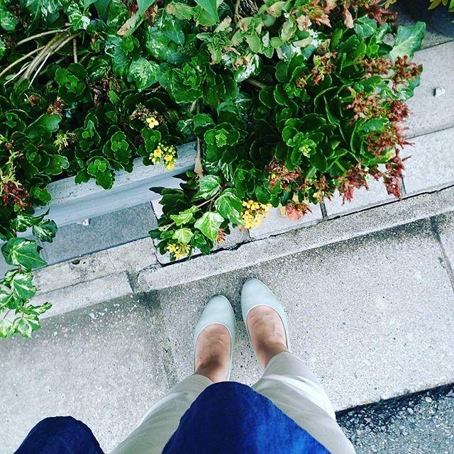 本日はライトブルーのエナメルパンプスにネイビーのトップスで。 #靴磨き女子部 #ハスキー犬 #ハスキーケン #緑がきれい #梅雨 #エナメル #ブルー #ホワイト #本日の足元チラッ #パンツスタイル #足元クラ部