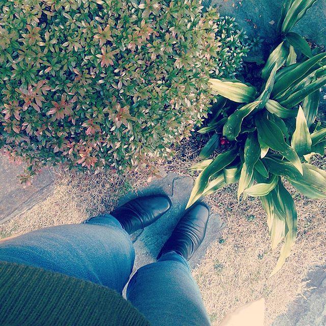 本日は厚地のニット、裏起毛のデニムに黒のショートブーツで。今週はかなり冷え込んでますね。寒さ対策ファッションです☆#靴磨き女子部 #shoecaregirls #ハスキー犬 #ハスキーケン #ショートブーツ #marron #デニム #裏起毛 #righton #カーキ #ニット #galladagalante #寒い日 #冬 #センリョウ #革靴 #靴のこと #足元クラ部 #mowbraymania  #モゥブレィ同盟 #靴磨きHP:@shoecaregirls