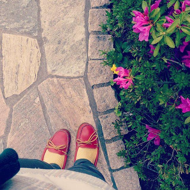 今日の昼間は暑いくらいでした。明るい色のミネトンカのパンプスに合わせて、ちょっと前に買っておいたメッシュの靴下の出番です#靴磨き女子部 #shoecaregirls #ハスキー犬 #ハスキーケン #革靴好き #mowbraymania #モゥブレィ同盟 #天気の良い日 #minnetonka #ミネトンカ #itsinternational #globalwork #靴下屋 #靴下くら部 #足元クラ部 #ツツジ #お散歩HP:@shoecaregirls