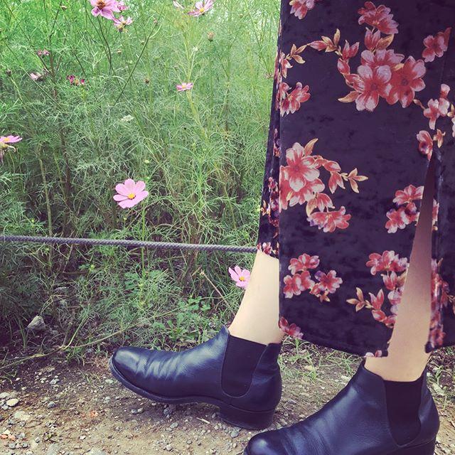 浜離宮恩賜庭園をお散歩コスモスがキレイでした涼しくなったので、サイドゴアブーツでおでかけ#靴磨き女子部#バクバクコアラ #サイドゴアブーツ#革靴女子#花柄ワンピース#靴磨きの日2017 #お散歩中#浜離宮恩賜庭園#findmytokyo
